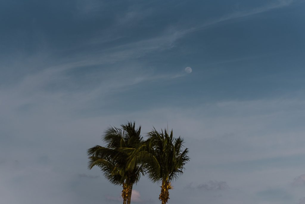 Palm trees and blue sky for a Moon Palace Cancun Wedding by Caro Navarro Photography