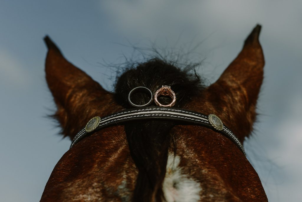 Wedding rings on a horse head. Now Sapphire Riviera Cancun Wedding by Caro Navarro Photography